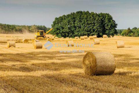 Eladó Mezőgazdasági, Pest megye, Nagykőrös - 8,78 Ha szántó aszfaltút mellett